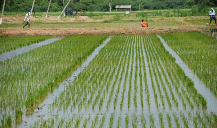 Rotational irrigation programme for rabi season from Oct 29 to Nov 5