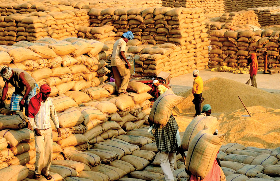 44.33 percent paddy procured in the mandis of total target so far