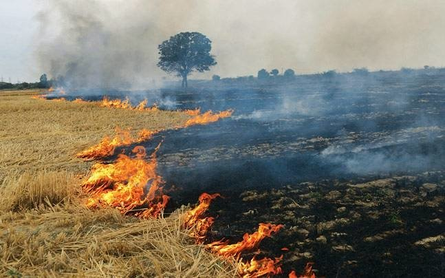 School education department accelerates campaign to create awareness about burning of paddy straw