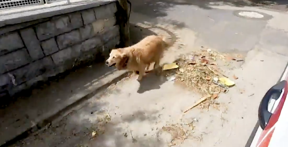 Heartbreaking Video: Dog runs behind ambulance carrying his owner