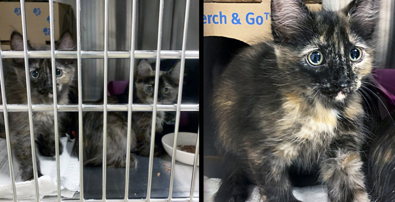 BC SPCA seizes 71 cats and kittens from Squamish-area property